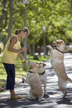 Smiling woman obedience training three dogs on walk in park Reklamní fotografie