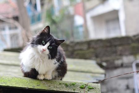 homeless cat living on istanbul street