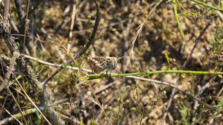 grasshopper on fields day light close up composition 版權商用圖片