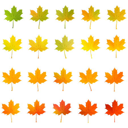 autumn maple leaf green to red color vector set