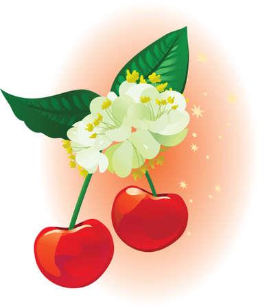 linden: Cherry and linden on a star background illustration