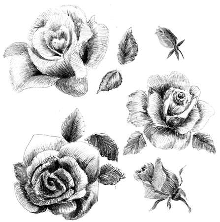 pencil plant: Flower sketch  set hand drawing