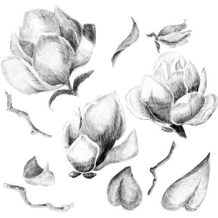flower sketch: Flower sketch  set hand drawing