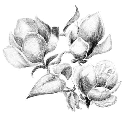 etched: Flower sketch  bouquet hand drawing