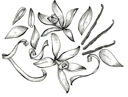 Flower sketch  set hand drawing for design photo
