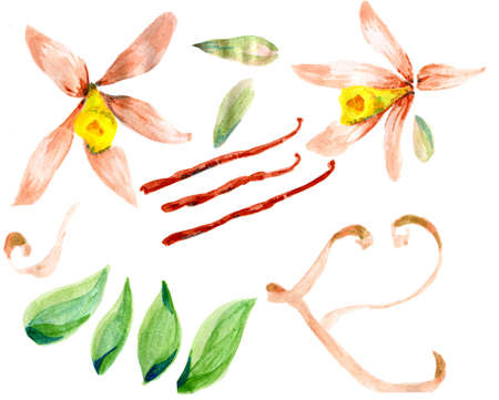 Flower sketch  watercolor set hand drawing for design photo