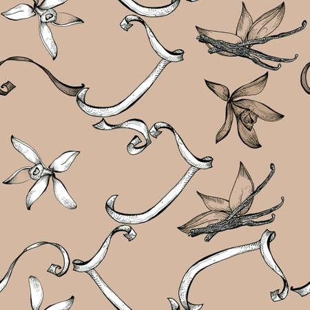 flor de vainilla: Boceto de vainilla Flor dibujo patr�n transparente mano