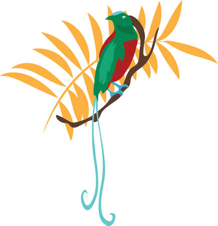 bird of paradise: Bird of paradise vector illustration travel design icon Stock Photo