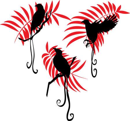 ave del paraiso: Ave del paraíso silueta ilustración vectorial conjunto
