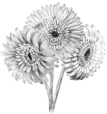 花スケッチ花束手に描画します。ガーベラ イラストの詳細 写真素材 - 44818363