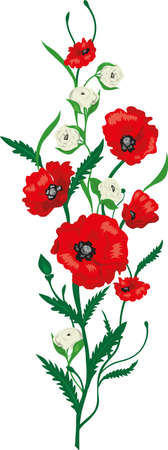 roses garden: Flower  Poppies and Roses bouquet. Summer background garden
