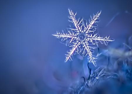 Macro foto van een sneeuwvlok op een wollen hoed