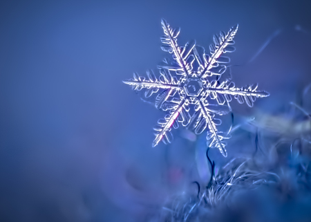 Macro Image of a Snowflake on a Wool Hat