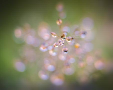 dew on grass Фото со стока