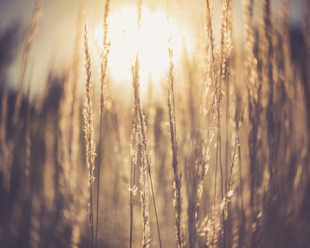 sunlight through tall grass