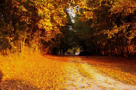Path through the autumn trees in St Cyran du Jambot, Indre department, France