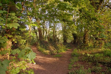Pathway leading through Prestwich Clough, Manchester, UK