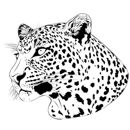 Leopard, tattoo Stock Vector - 6759081