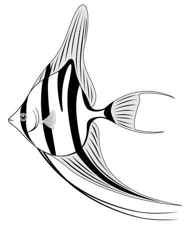 Angel fish Vector