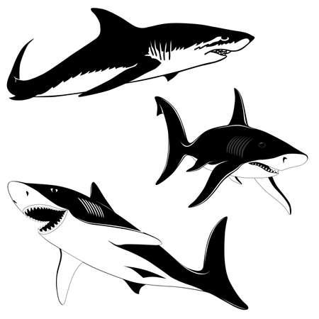 saltwater fish: Set di tre squali  Vettoriali