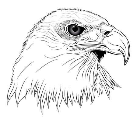 hawks: Eagle sotto forma di un tatuaggio Vettoriali