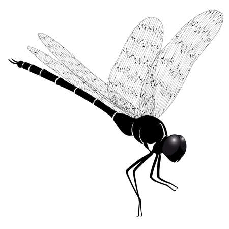 Dragonfly represented in the form of a tattoo  Illustration