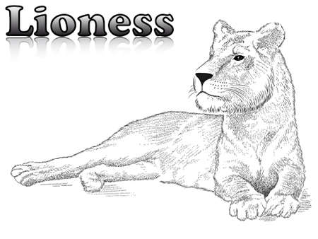 Vector lioness represented in the form of a tattoo Ilustração