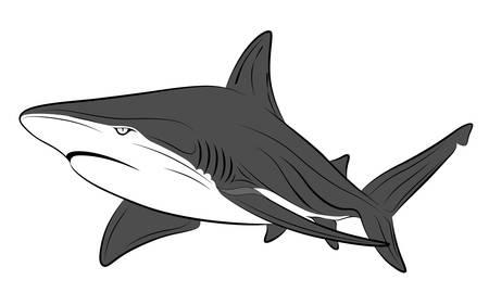 aquatic life: Shark, tattoo