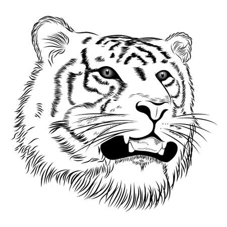 cougar: Vector face of a tiger Illustration