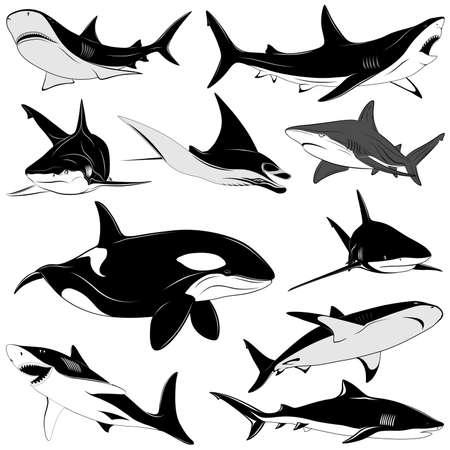 tiburones: Conjunto de varios tiburones, tatuaje