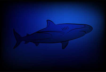 Shark at ocean