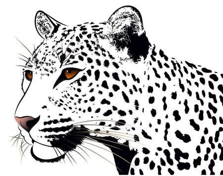 jaguar: Leopard, tatuaje Vectores