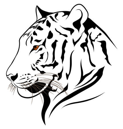 tiger isolated:  tiger