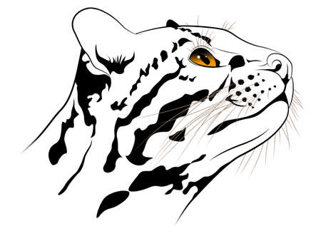 leopard cat: Ocelot executed in the form of a tattoo Illustration