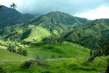 Cocora valley &amp, wax palm. photo