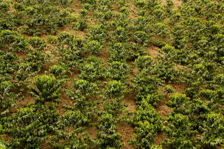 Fields and coffee plantations in the Colombian Andes. Stock Photo - 6696653