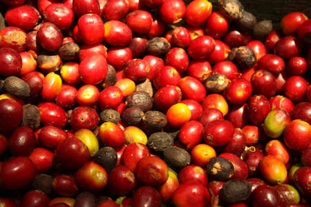 fruit trade: coffe