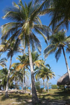 del: Playa Blanca on the island of Baru. Cartagena de Indias. Colombia