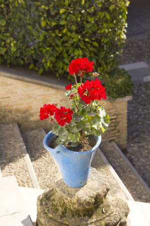 Pot, with the typical carnation Cordoba, in an Andalusian patio  Spain photo