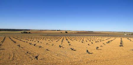 plows: Panorama of fields with vineyards in Castilla la Mancha, Spain  Mediterranean landscape  Stock Photo