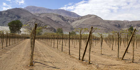inhospitable: Vineyard cultivation for fruit and wine, in the inhospitable mountains of the Andes  Chile