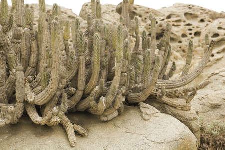 atacama: Desert Coast of Chile  Atacama Desert , Pan de Azucar national park