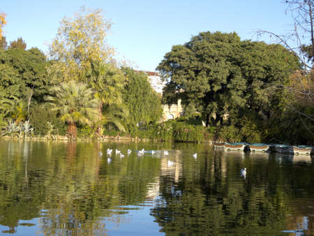 garden scenery: Birds swimming in the pond Ciutadella Park  Garden historic city of Barcelona, Catalonia, Spain  Stock Photo