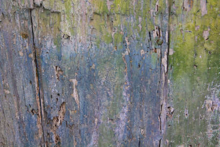 Abstract painting in a damaged door  Photo background  Copy Space Stock Photo - 17308046