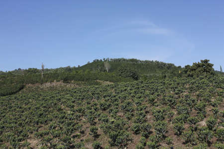 cordillera: The Coffee Belt, also called Coffee Triangle is a topographic region of Colombia