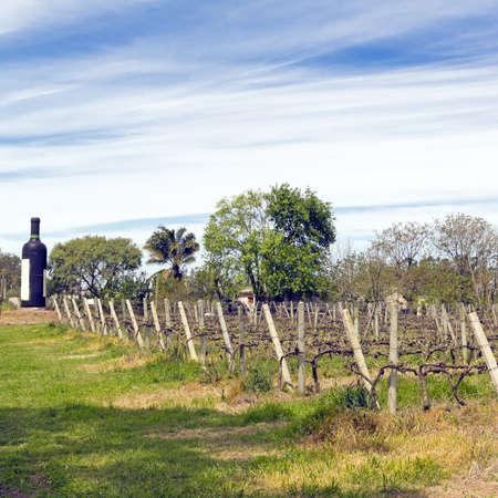 south american: Southeast Zone Uruguayan wine, near the Rio Uruguay  Carmelo  Uruguay