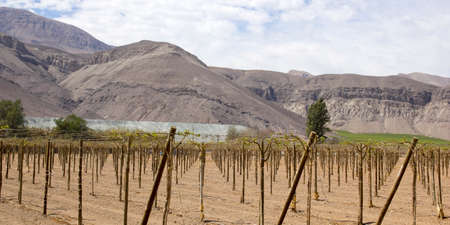 mendoza: Vineyard cultivation for fruit and wine, in the inhospitable mountains of the Andes  Chile