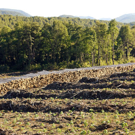 degradation: Deforestation in the Chilean Andes  Timber industry is the most important in the country