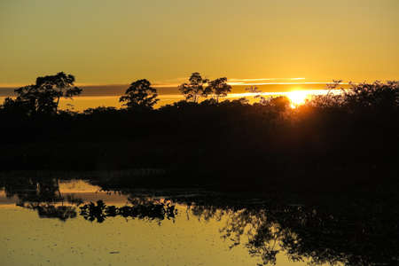 dawning: Sunrise in the jungle. Yacuma Natural Park, Bolivia. Stock Photo