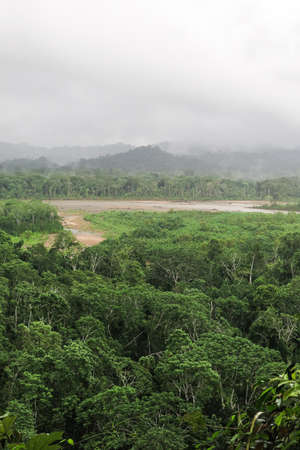humid south: Rainforest. Jungle in the Madidi National Park, Bolivia